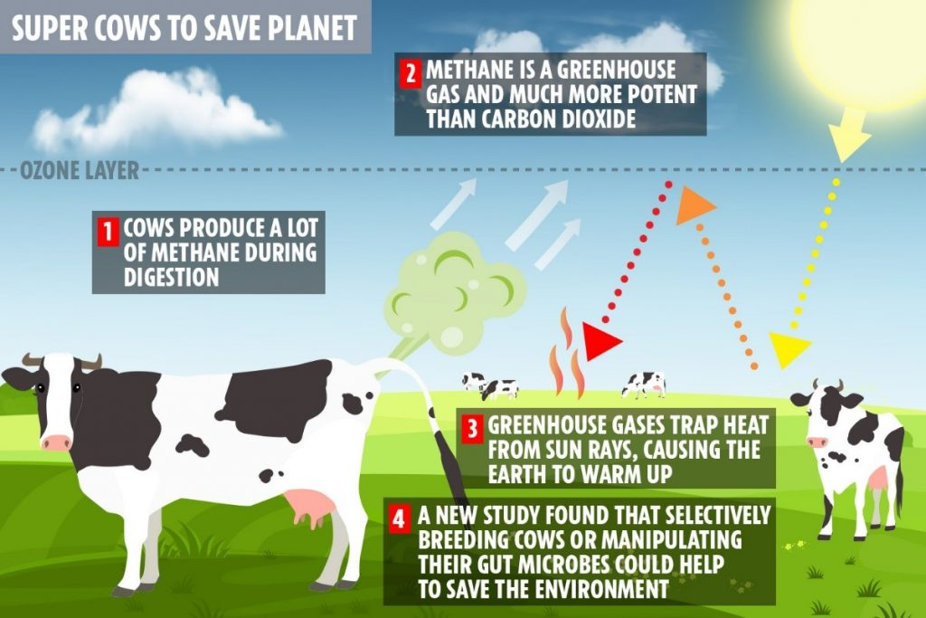 Impact of gases produced by cows on the atmosphere