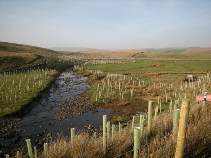 Trees Wetlands and Other Green Infrastructure